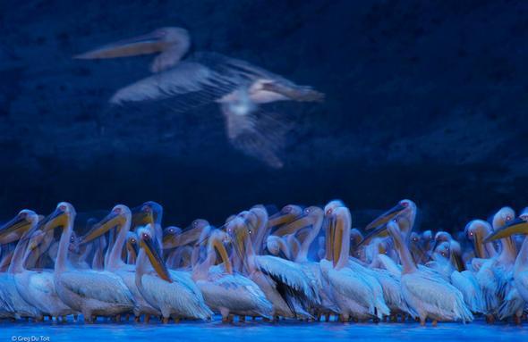 تصاویر : برترین عکسهای حیاتوحش سال