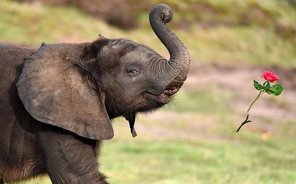 تصاویر : عجیب و دیدنی از دنیای حیوانات