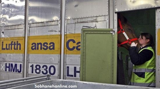 واردت اسب قیمت اسب