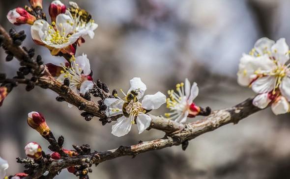 تصاویر : طبیعت بهاری بجنورد