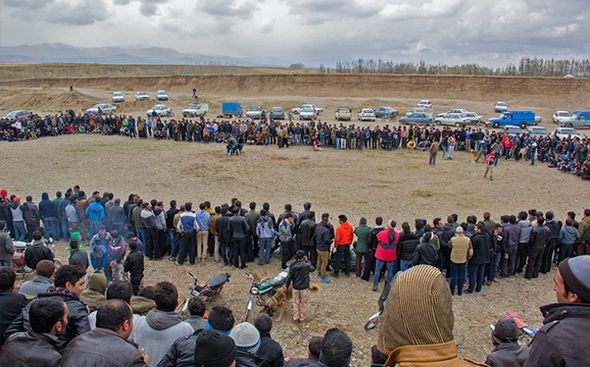 تصاویر : نبرد خونین سگها در زنجان