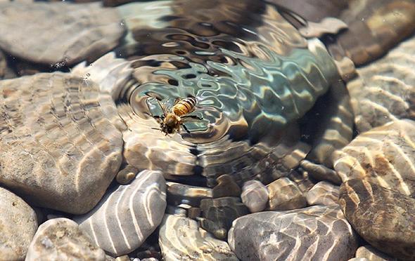 تصاویر : پارک ملی لار