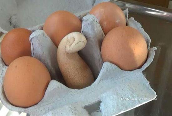 تخم مرغ عجیب و غریب/ عکس