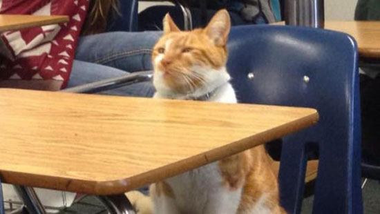 گربهای که کارت دانشجویی گرفت!/ عکس