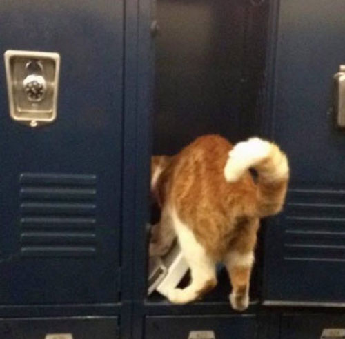 گربهای که کارت دانشجویی گرفت