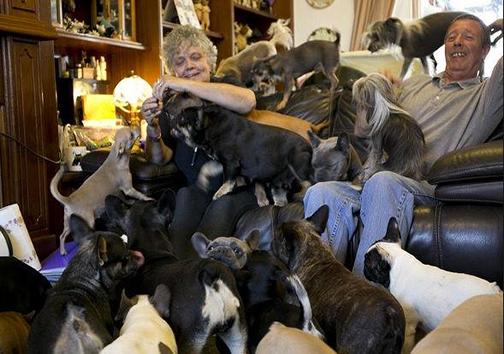 زوج هم خانه با 41 سگ + تصاویر