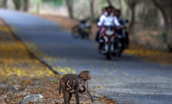 تصاویر : دنیای حیوانات