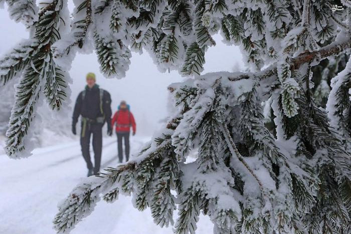 تصاویر: شادی بچه های آلمانی از اولین برف
