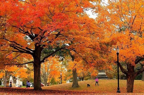 تصاویر : پاییز در نقاط مختلف جهان