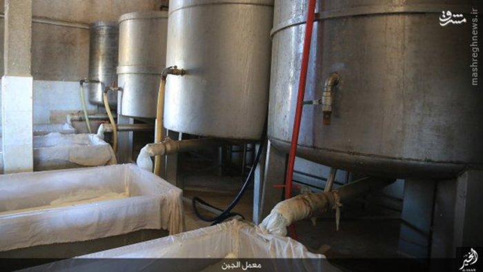 تصاویر: کارخانه لبنیات داعش
