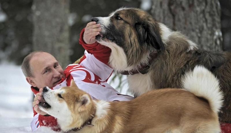 تصاویر : عشق پوتین به حیوانات