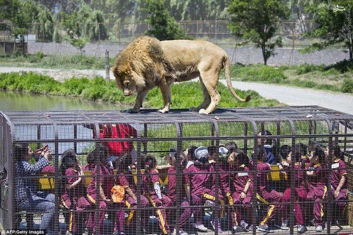 عکس/ باغ وحشی که آدمها در قفس میروند