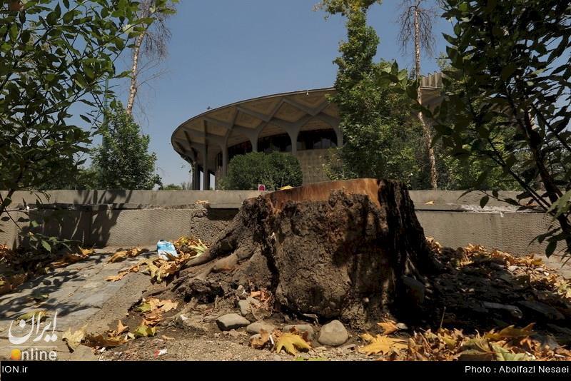 قطع درخت های چنار خیابان ولیعصر + عكس