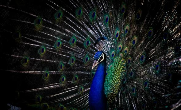 تصاویر : باغ پرندگان اصفهان