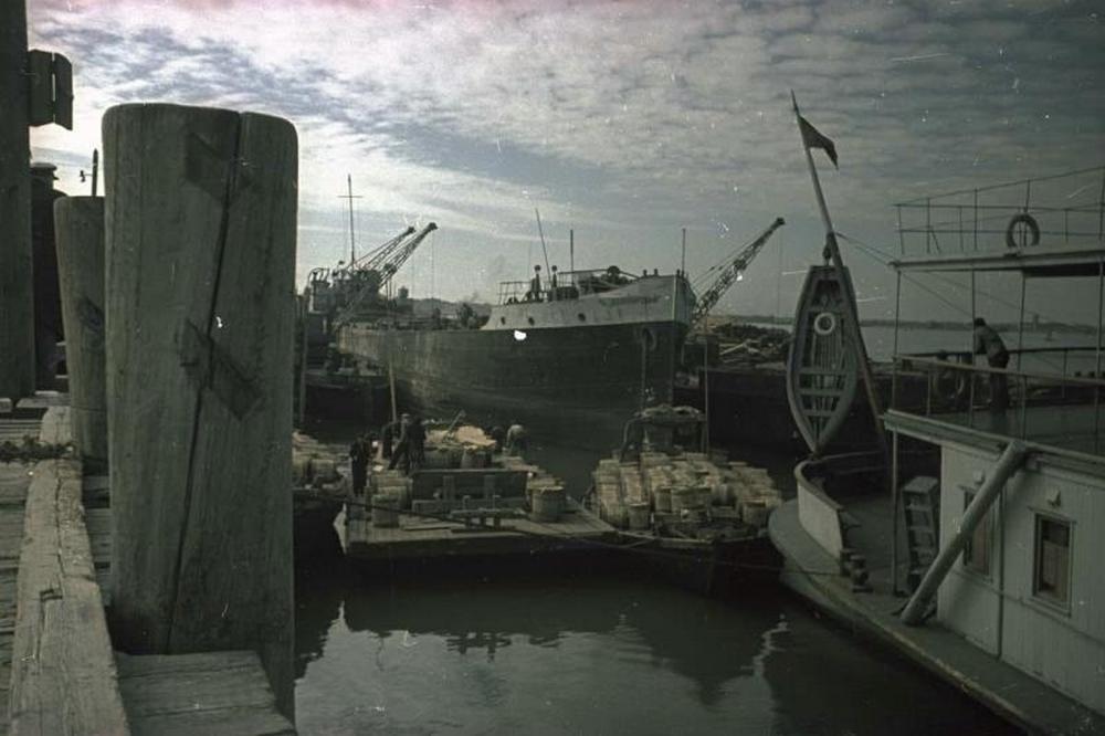 تصاویر : صید فیل ماهی خزر در 70 سال پیش
