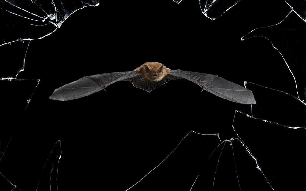 تصاویر : عکسهای زیبا از حیات وحش