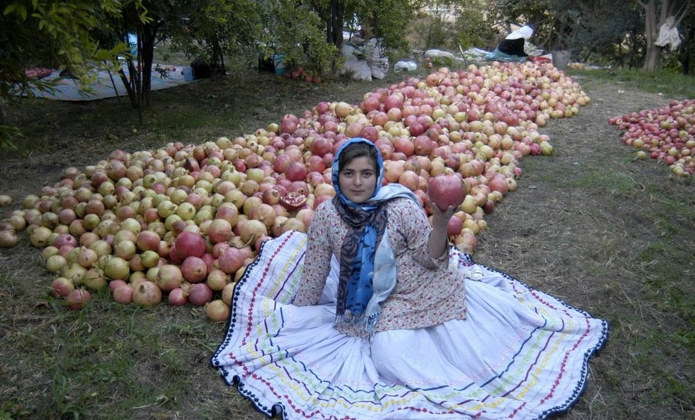 تصاویر : جشن انار در روستای انبوه