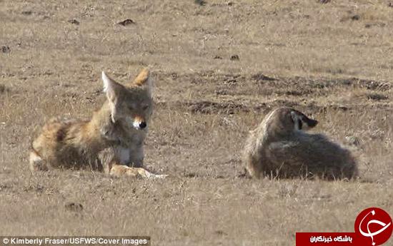 عجیبترین زوج شکارچی +تصاویر