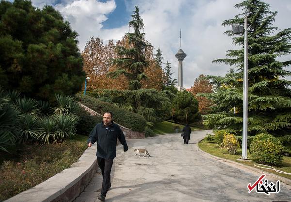 هوای تهران سالم است/ پیش بینی بارش باران