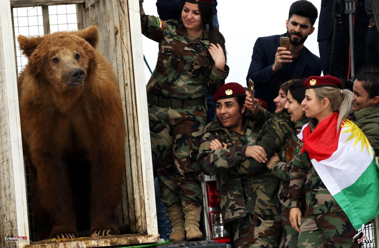 تصاویر : رهاسازی خرسهای قهوهای توسط زنان پیشمرگه در مرز ایران