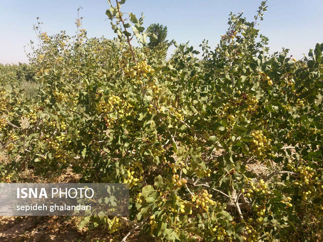 توصیه های هواشناسی کشاورزی برای روزهای پایانی سال