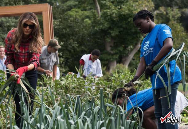 تصاویر : باغبانی بانوی اول آمریکا در کاخ سفید