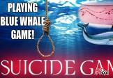 نظر یک کارشناس رسانه درباره چالش «نهنگ آبی»: وجود خارجی ندارد؛ به هر کسی که نسخهای از آن را بیاورد هزار دلار جایزه میدهم