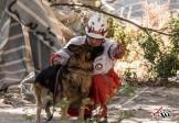 هلال احمر: مناطق زلزلهزده جای سلفی با سگ شخصی نیست/ سگهای خود را به مناطق زلزله زده نیاورید