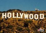 کیهان: هالیوود در حال ساخت چند فیلم است که نشان دهد داعش را آمریکا نابود کرد