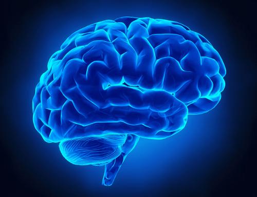 اندازه،دليل،لايه،چروك،قشر،برجستگي،فرورفتگي،مغز