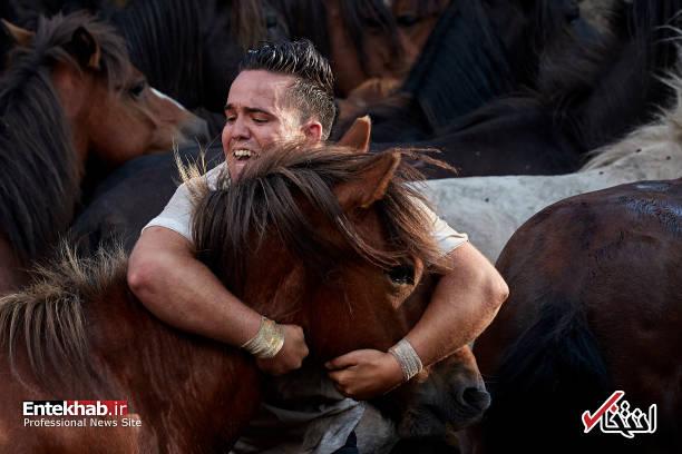 تصاویر : اسب
