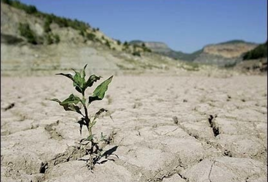 ایران درحال خشکشدن است/استانهای شمالی دچار خشکسالی شدهاند