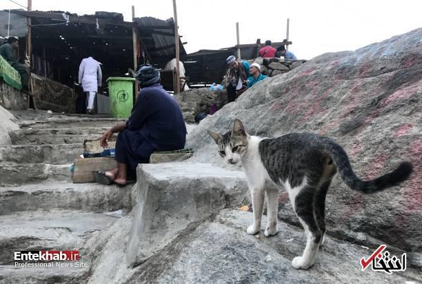 عکس/ گربهها در صحن کعبه و غار حرا