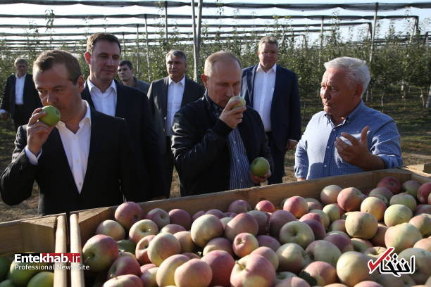 تصاویر : پوتین و مدودف در باغ سیب