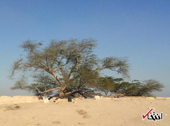 همه چیز درباره درخت زندگی بحرین درخت زندگی بحرین