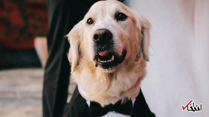 ازدواج زن بریتانیایی در برنامه زنده تلویزیونی با سگش جنجالی شد +تصاویر