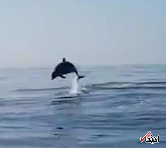 تشکر زیبای یک دلفین از ماهیگیرانی که فرزندش را آزاد کردند