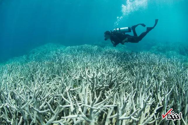 تغییرات اقلیمی صخره های مرجانی را نابود می کند