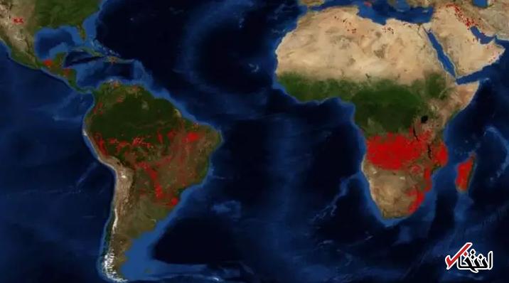 چرا وضعیت جنگلهای آنگولا و کنگو از آمازون خطرناک تر است؟