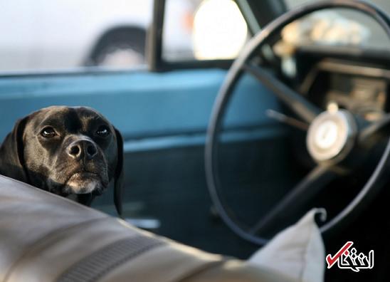 سرقت خودرو در فلوریدا توسط یک سگ!