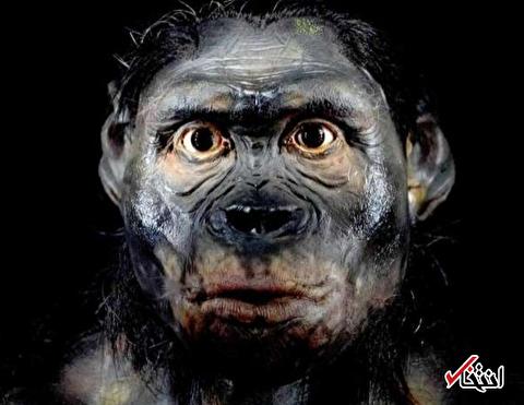 بدشانسی منجر به انقراض نئاندرتال ها شده است؟