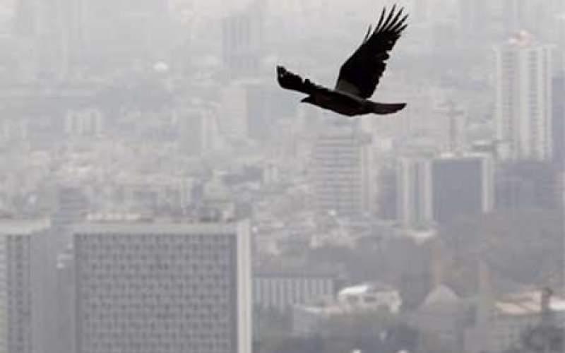 هشدار سازمان هواشناسی:  آلودگی هوا در ۱۰ کلانشهر تا آخر هفته ادامه دارد