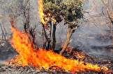 امسال تاکنون چند هزار هکتار از جنگل ها در خوزستان آتش گرفته اند؟ / محیط زیست: بیشتر آتش سوزیها عمدی بوده