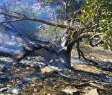 تداوم آتش سوزی در جنگل ها و مراتع گچساران / منابع طبیعی:  وزش باد و سخت گذر بودن عامل کندی مهار آتش است / به دلیل شیب تند منطقه اعزام نیرو برای مهار حریق  امکان پذیر نیست