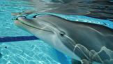 با دلفینهای رباتیک ۲۶ میلیون دلاری آشنا شوید+تصاویز
