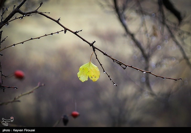 تصاویر: طبیعت پاییزی - سنندج