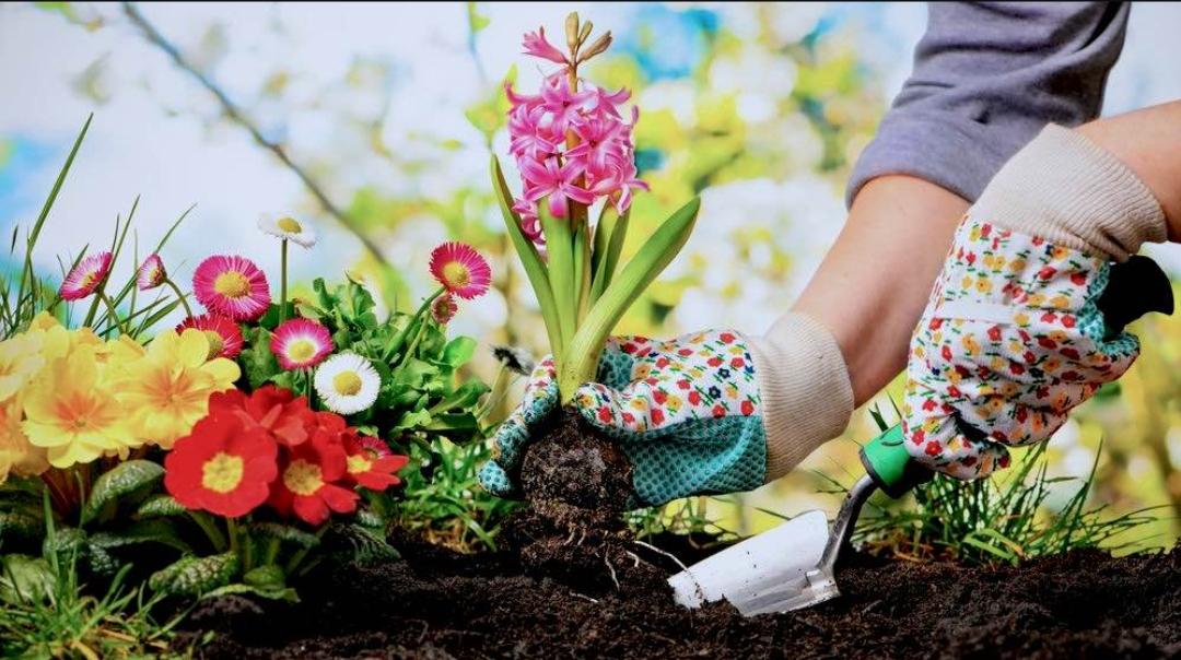 پرورش گیاهان